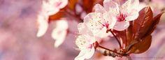 Para florir a vida e trazer alegria e serenidade, nada melhor que flores. #CapasFacebook #FB #Facebook