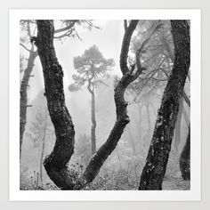 fog,foggy,misty,mist,mono,black and white,monochrome,tree,trees,forest,retro,live, mountains,mountain,landscapes,sierra nevada, national park, outdoors, nature, landscape, exterior, europe, photography, spain, granada,sky,
