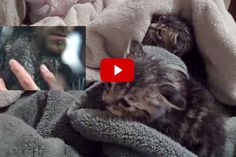 Kittens Rescued From Flood Water - Amazing Footage - Love Meow