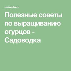 Полезные советы по выращиванию огурцов - Садоводка