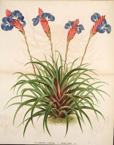 Todo para tu jardín: Aprender a comprar, cuidar y decorar con Tillandsi...