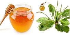 Fruits And Veggies, Preserves, Honey, Mai, Health, Food, Syrup, Canning, Plant