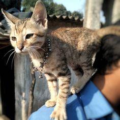 I love this Cutie..Do you also love Cat ?    #catsofig #caterpillar #catoftheday #catlady #cat #caturday #catchup #catlovers #catalunya #catchingfire #catania #catlife #catsagram #catalonia #catslover #catwalk #cathedral #catholic #catalunyaexperience #catsofworld #catering #prilaga #cateyes #catlover #catwoman #catlove