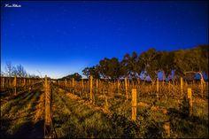 Sandalford Estate Winter Nightscape, Perth