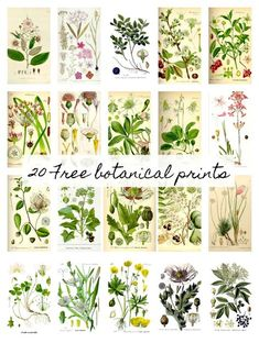20 Free Botanical Prints and Easy DIY Wall Hanging