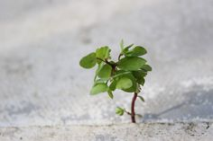 nature breaking through - Google Search