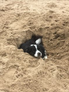 Border Collie in the sand Yep - they pretty much feel at home anywhere :) Border Collies, Border Collie Welpen, Border Collie Puppies, Collie Mix, Cute Dogs Breeds, Dog Breeds, Photo Animaliere, Herding Dogs, Fauna