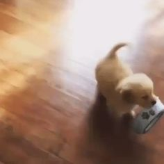 My Shih Tzu used to do that when she had plastic bowls.  She would carry them in and throw them at me.EA