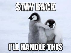 15 Down Right Hilarious Penguin Memes - Penguin Funny - Funny Penguin meme - - 15 Down Right Hilarious Penguin Memes The post 15 Down Right Hilarious Penguin Memes appeared first on Gag Dad. Penguin Pictures, Cute Pictures, Baby Pictures, Funny Babies, Cute Babies, Cute Baby Animals, Funny Animals, Most Famous Memes, Funny Captions