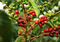 coffee beans. beautiful in every form.