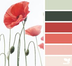 Poppy Hues Red Color Schemesred