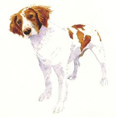 Springer Spaniel watercolor giclee print by wizzlewood on Etsy, $25.00