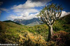The Karoo Desert National Botanical Garden in Worcester. Western Cape, South Africa