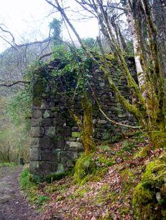 casa abandonada en medio del bosque oscuro