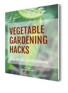 Growing Watermelons - Learn the tricks and how to's! - Growing Watermelons – Learn the tricks and how to's! Growing Blueberries, Growing Fruit Trees, Growing Orchids, Growing Watermelons, Growing Carnations, Growing Geraniums, Growing Hibiscus, Growing Rhubarb, Growing Cabbage