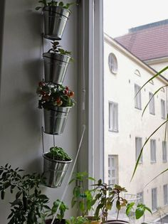 The Urban Garden: Low-Cost Solutions from Ikea Ikea Fintorp vertical garden idea. Indoor Window Garden, Garden Windows, Indoor Plants, Indoor Herbs, Small Space Gardening, Small Gardens, Urban Gardening, Indoor Gardening, Ikea Hanging Planter