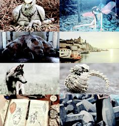 confundoh: HP Aesthetics: Fantastic Beasts and Where to Find Them