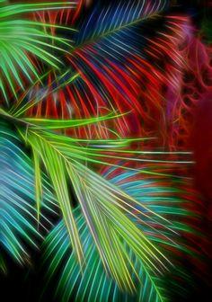Palm6_edited-1
