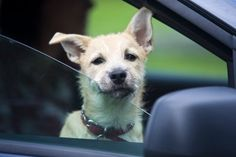 How To Relieve Motion Sickness In Pets