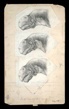 E.S. Christman's study for the life restoration of the sauropod dinosaur Camarasaurus