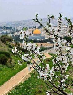 masjid al aqsa Palestine History, Israel Palestine, Jerusalem Israel, Beautiful Mosques, Beautiful Places, Kingdom Of Jerusalem, Terra Santa, Dome Of The Rock, Islamic Architecture