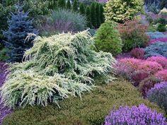 Conifer Garden.
