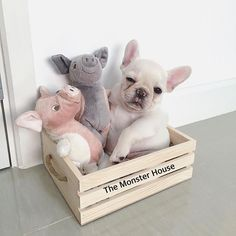 3 Little Piggies at the Monster House, French Bulldog Puppy