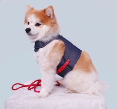 Content filed under the Dog Houses taxonomy. Online Pet Supplies, Dog Supplies, Spring Clothes, Spring Outfits, Pug Life, Dog Houses, Zurich, Dog Accessories, Geneva
