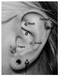 anatomy of the ear, piercing style. less extreme and more socially acceptable, the ear piercings. Love the small gauge/ lobe