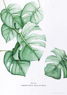 Cadeau : l'illustration Monstera   My Little Fabric #art #LampIllustration