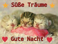 Sleep, Animals, Goodnight And Sweet Dreams, Funny, Acre, Animales, Animaux, Animal, Animais