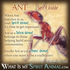 Get in-depth Ant Symbolism & Ant Meanings! Ant as a Spirit, Totem, & Power Animal. Plus, Ant in Far Eastern & Native American Symbols & Ant Dreams! Native American Zodiac Signs, American Indian Quotes, Native American Animals, Native American Quotes, Native American Symbols, American History, American Indians, Spirit Animal Totem, Animal Spirit Guides