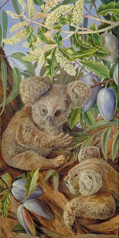 Australian Bears(Koala) and Australian Pears   Marianne North