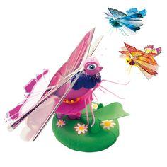 Lily Papillon