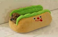 Dachshund in a Hot Dog Bed For all the weiner dog lovers! Funny Animals, Cute Animals, Funny Pets, Animals Dog, Weenie Dogs, Hotdog Dog, Chihuahua Dogs, Dachshund Love, Daschund
