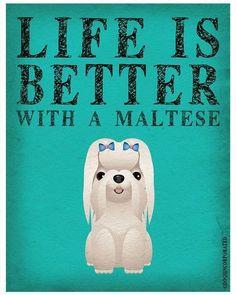 how to groom a maltese puppy cut do it yourself pet grooming maltese malteselife dog mymaltese mydog pet dogoftheday malteseoftheday solutioingenieria Image collections