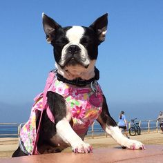 10 Of Our Favorite Instagram Beach Doggies