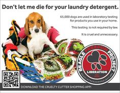 Don't let me die for your laundry detergent.  65,000 dogs are used in laboratory testing for products you use in your home.  Beagle freedom project.