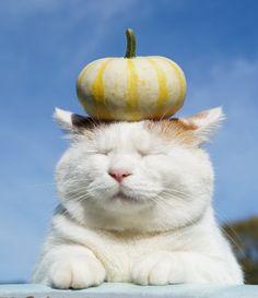 Baby pumpkin on the SHIRO.