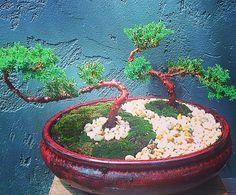 Ying and Yang Bonsai. Inspired by Floyd. Great minds think alike. #bonsaitree #bonsai #bonsaiaustralia #yingyang #yingandyang #bellarinepeninsula #geelong #surfcoast #oceangrove #christianjcreations #asian #asianstyle #asianinfluence #christianjcreations by christianjcreations http://ift.tt/1JO3Y6G