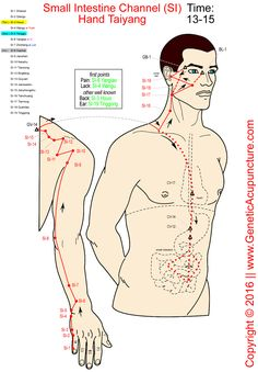 gall bladder acupuncture meridian traces out the shape of liver gall bladder and biliary tree Acupuncture Points Chart, Meridian Acupuncture, Acupressure Points, Acupuncture Benefits, Cupping Therapy, Massage Therapy, Meridian Points, Acupressure Treatment, Reflexology Massage