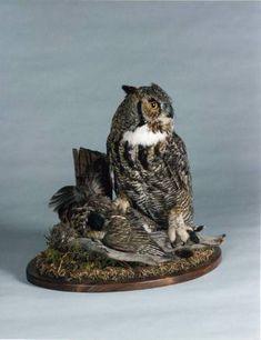 Bird, Owl Taxidermist in Alberta