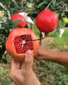 How To Cut Pomegranate, Pomegranate Ideas, Cooking Tips, Cooking Recipes, Healthy Snacks, Healthy Recipes, Useful Life Hacks, Diy Food, Food Hacks