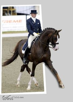 My most Favorite Dressage Horse, Bjorsells Briar 899, ridden by Jan Brink