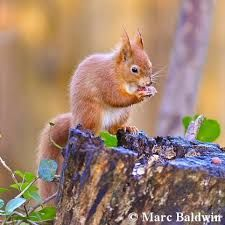 Image result for squirrels world