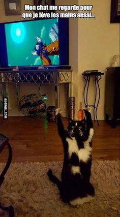 Mon chat est fan de DBZ...