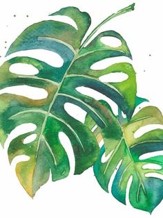 watercolour painting of leaves. Watercolor Leaves, Watercolour Painting, Painting & Drawing, Painting Leaves Acrylic, Tropical Art, Tropical Leaves, Plant Art, Leaf Art, Botanical Illustration
