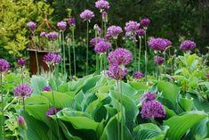 Hosta Garden Ideas 25