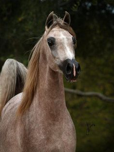 Aphrodite. Age: 3 (17 years old) Parents: Zeus and Silver Star. Mate: None. She is a fun loving young mare she is a bit flirty and loves meeting new people her Best Friend Is Destiny even though their polar opposites