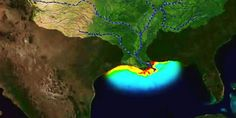 """Gulf of Mexico's Dead Zone Could be Largest Ever, Thanks to the Meat Industry. """"When fertilizer and manure washes off soy and corn fields used to grow feed for livestock, it not only contaminates local drinking water supplies, it flows into larger water bodies and creates toxic algal blooms from the excessive nutrients, particularly phosphorus and nitrogen."""""""